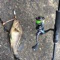 ツインさんの北海道室蘭市での釣果写真