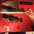 ヤスさんの愛知県東海市での釣果写真