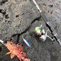 根掛かり直ちゃんさんの佐賀県東松浦郡での釣果写真