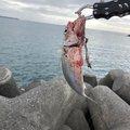 酢豚子さんの沖縄県沖縄市での釣果写真