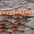 釣記乱さんの長崎県松浦市での釣果写真