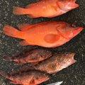 けむりさんの和歌山県東牟婁郡での釣果写真