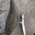 gariさんの福島県いわき市での釣果写真
