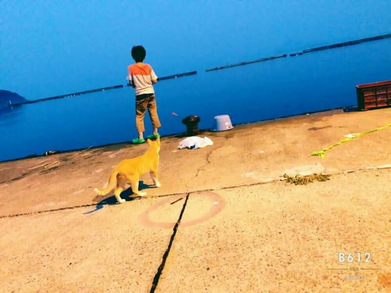 木下さんの投稿画像,写っている魚はアジ