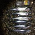 すーさんさんの富山県射水市での釣果写真