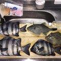 タクヤさんのカワハギの釣果写真