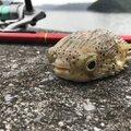 ぺこちゃんまんさんの沖縄県国頭郡での釣果写真