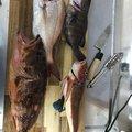 フィッシィングマスターさんの福岡県太宰府市での釣果写真