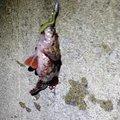 はしさんの青森県むつ市での釣果写真