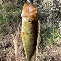 釣りに行こう!〜メシア〜さんの鹿児島県日置市での釣果写真