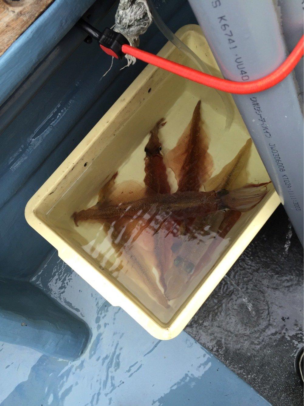 小太郎さんの投稿画像,写っている魚はヤリイカ