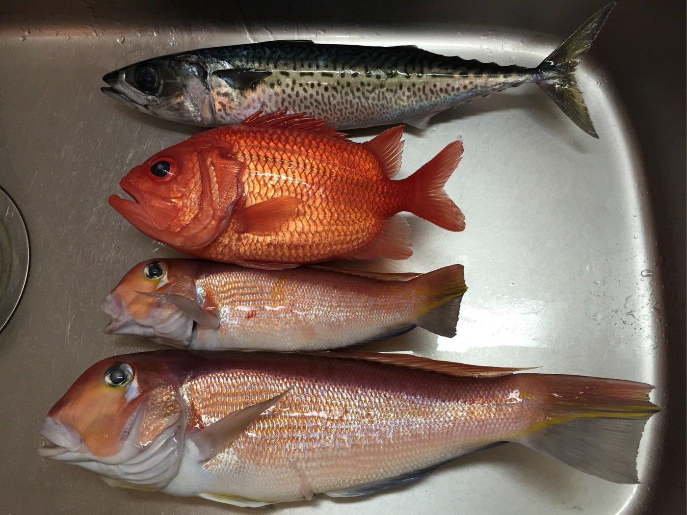 小太郎さんの投稿画像,写っている魚はアマダイ