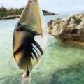 88diverさんの沖縄県うるま市での釣果写真