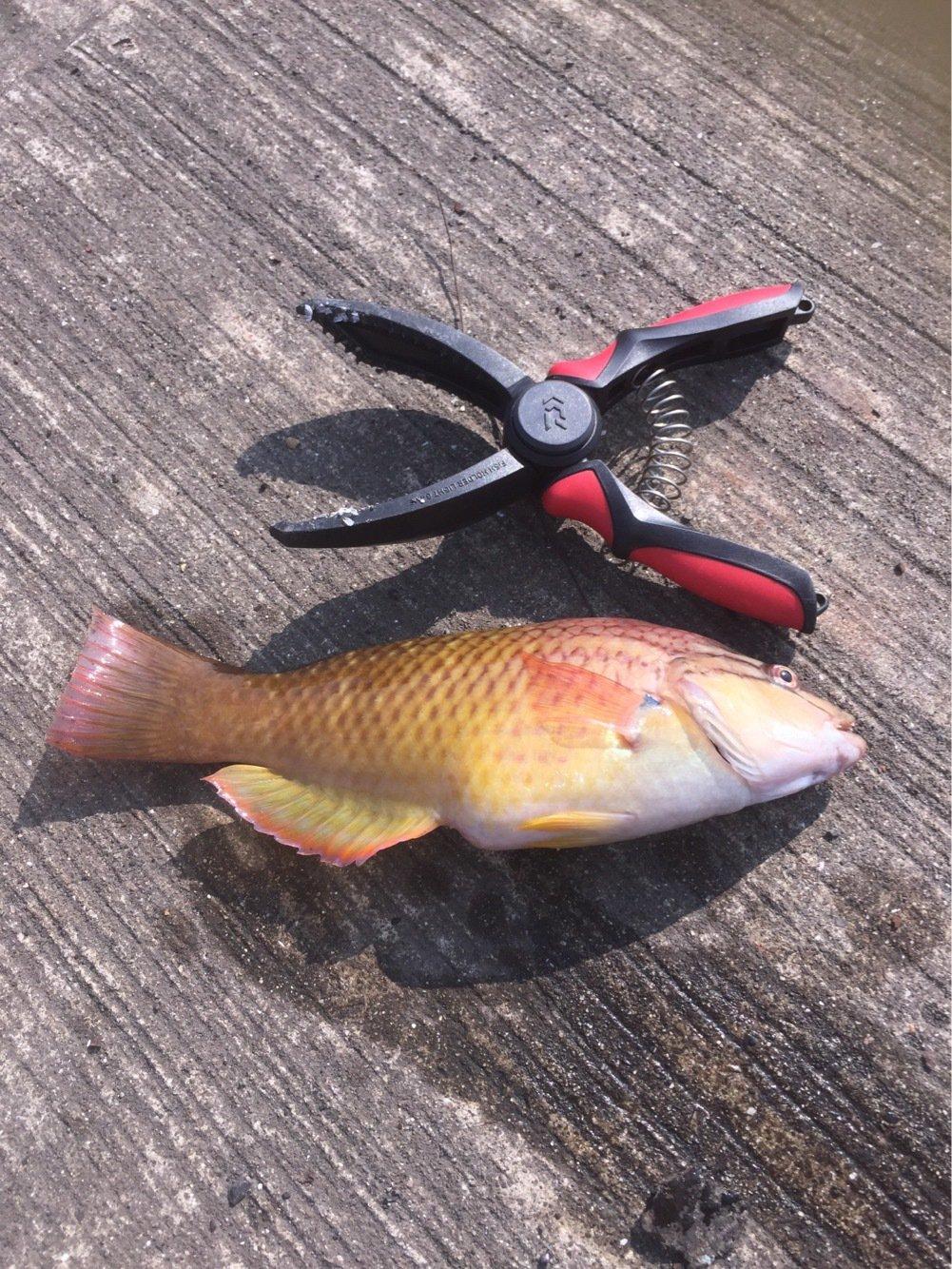 エギンガーさんの投稿画像,写っている魚はオオモンハタ