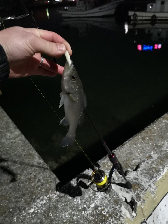 higuさんの投稿画像,写っている魚は