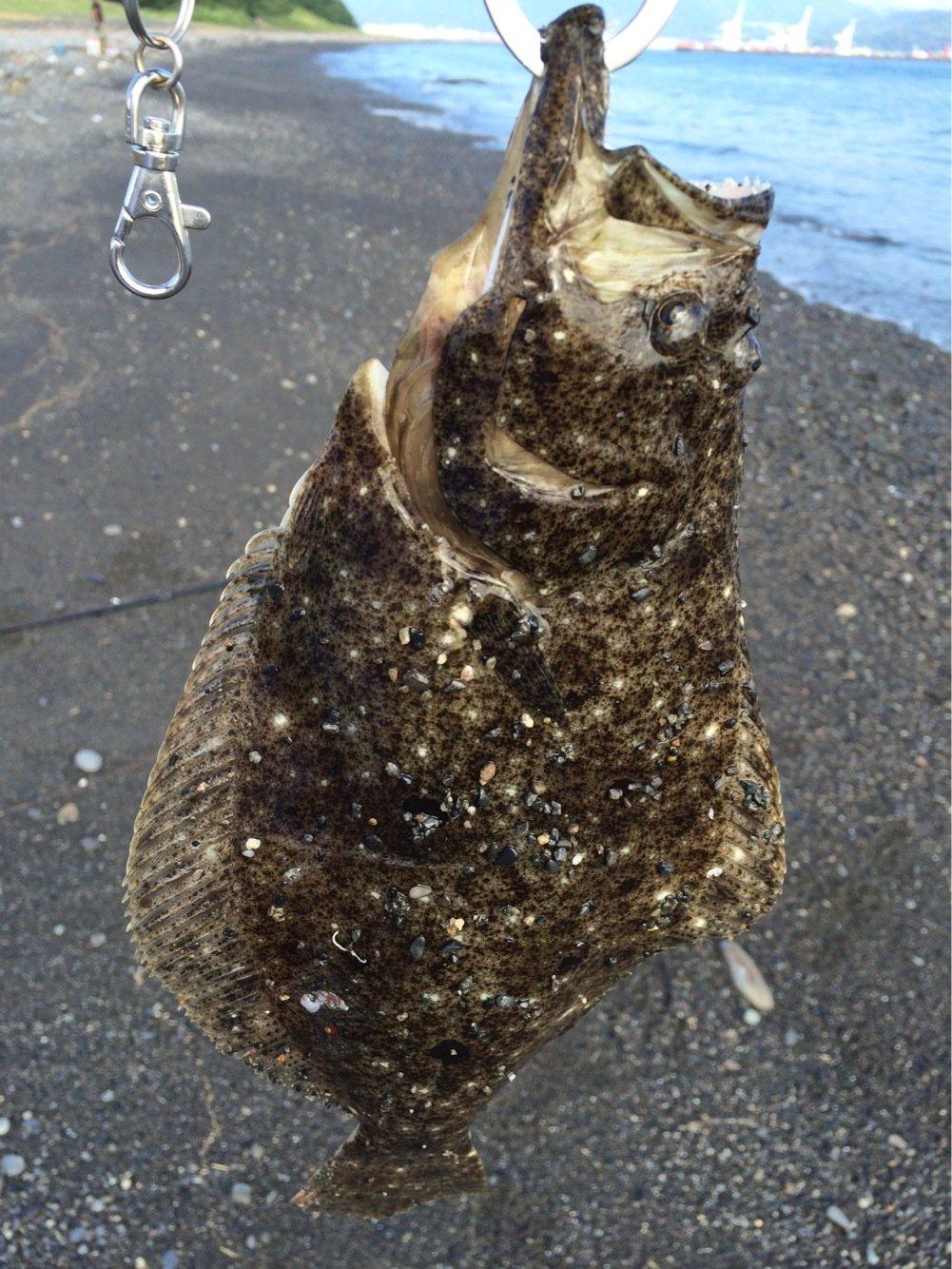 クサさんの投稿画像,写っている魚はヒラメ