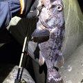 極楽釣さんの宮城県本吉郡での釣果写真