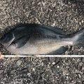 おいじゅさんの静岡県熱海市での釣果写真
