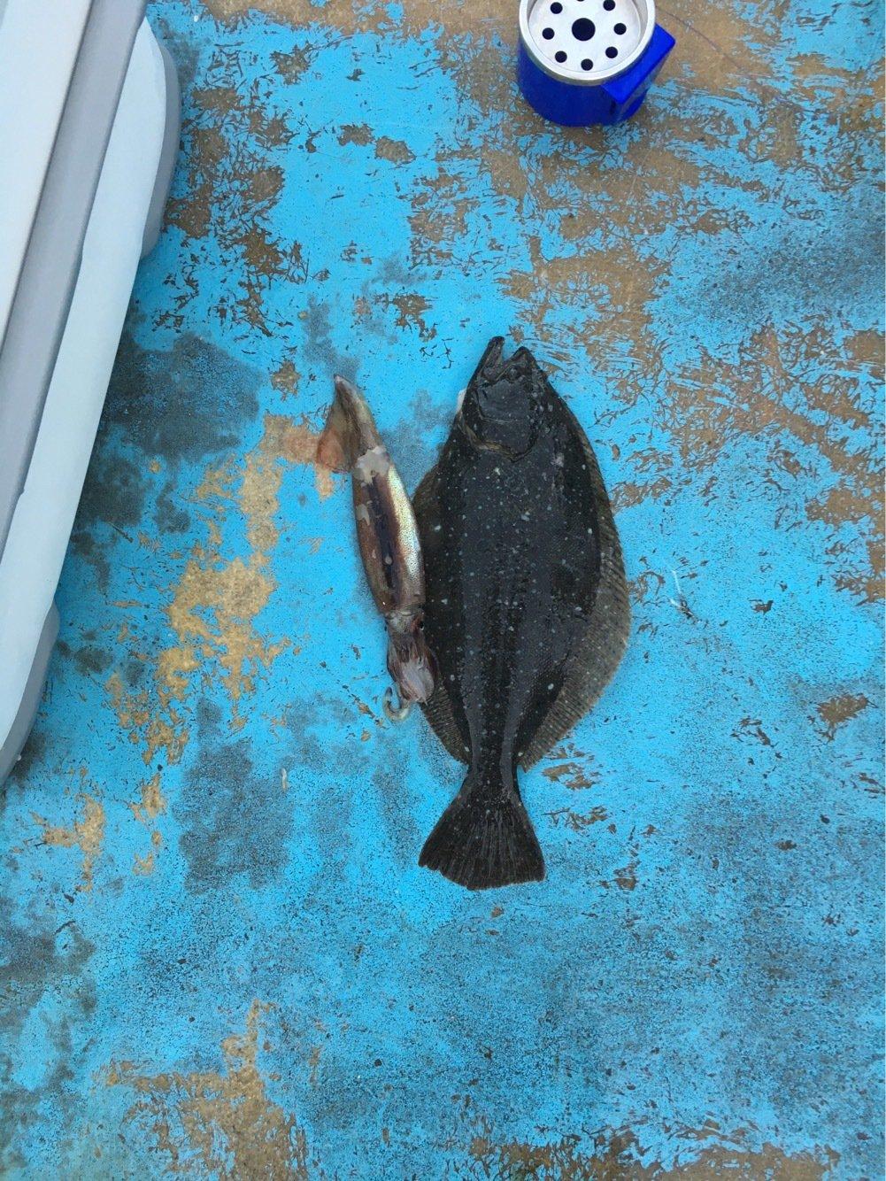 一人漫才師さんの投稿画像,写っている魚は