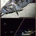 Tomohiro Pandaさんの宮城県亘理郡での釣果写真