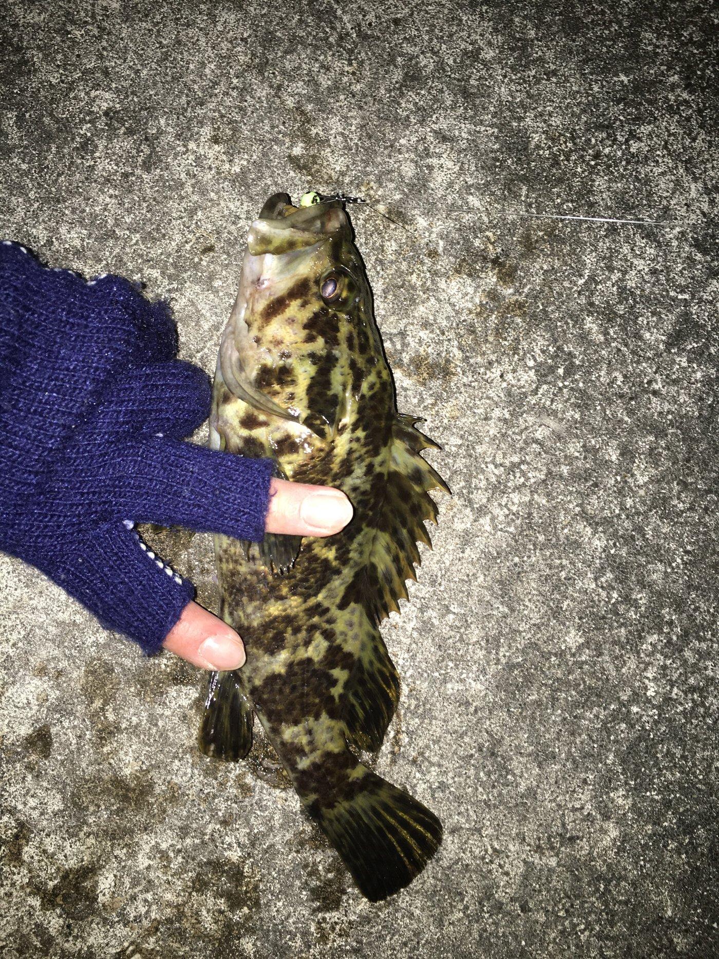 10-06さんの投稿画像,写っている魚はタケノコメバル