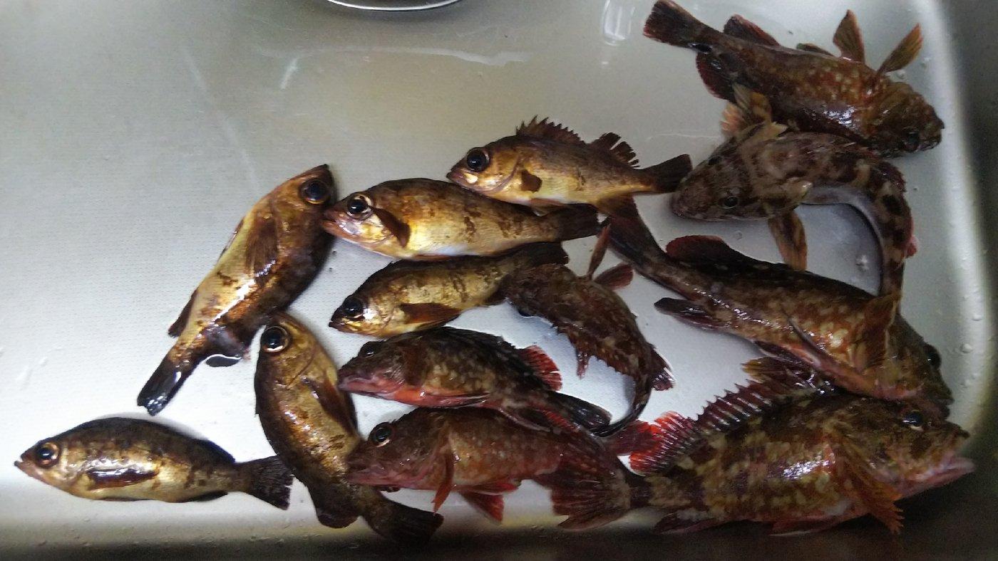 Hiroshi Aさんの投稿画像,写っている魚はカサゴ