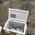 らんちゅうビートルさんの大阪府泉北郡での釣果写真