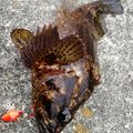 326さんの静岡県熱海市での釣果写真