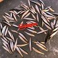 武ちゃんさんの北海道根室市での釣果写真