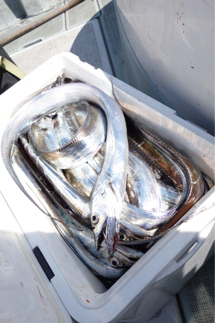 豚骨あんどうさんの投稿画像,写っている魚はタチウオ