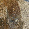 ケツがブリトニーさんのコウイカの釣果写真