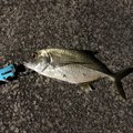 カデナんちゅさんの沖縄県南城市での釣果写真