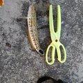 go さんの沖縄県沖縄市での釣果写真