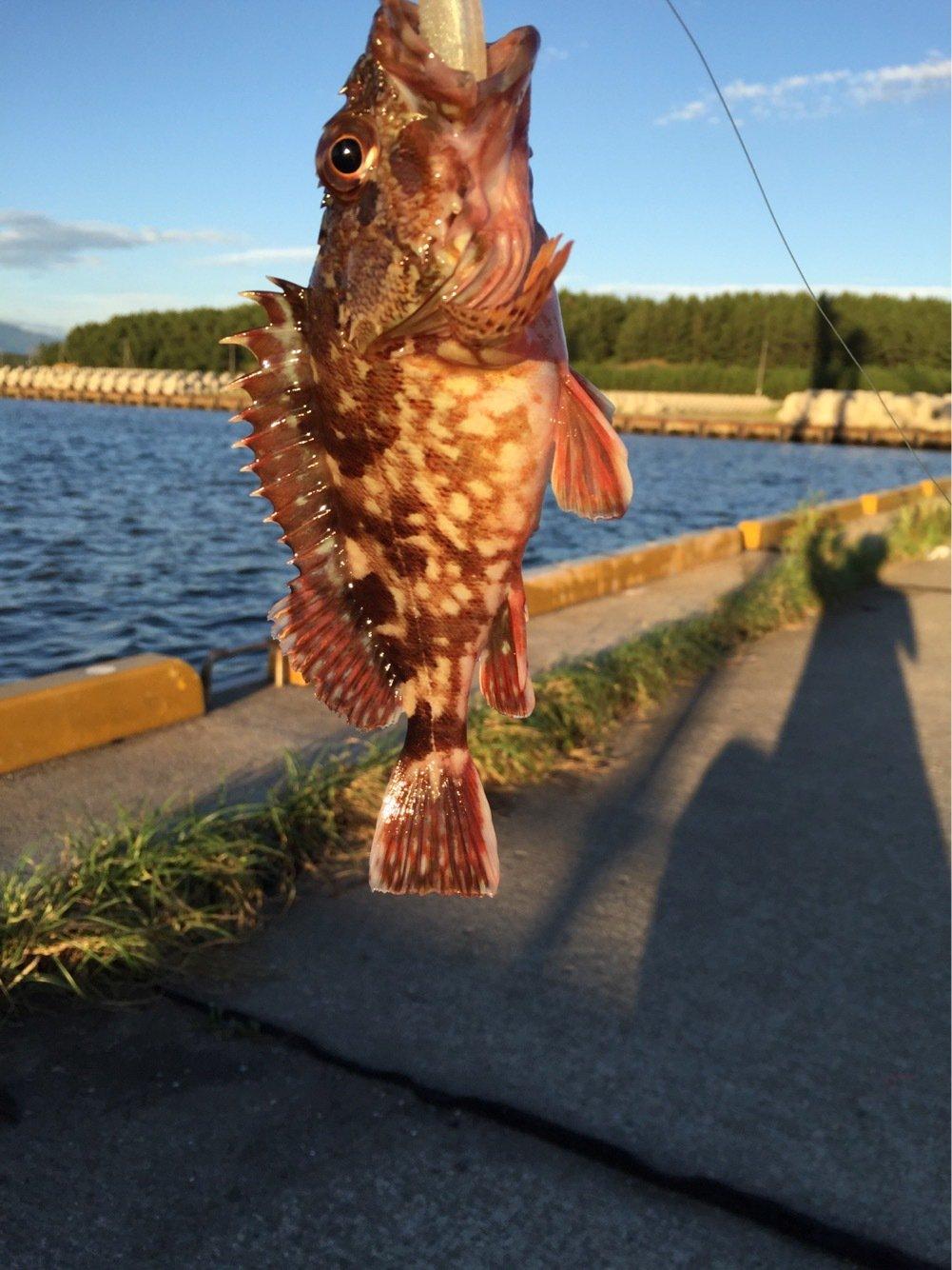 高橋幹博さんの投稿画像,写っている魚はカサゴ