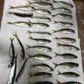 Kenji  Nagaiさんの千葉県館山市での釣果写真