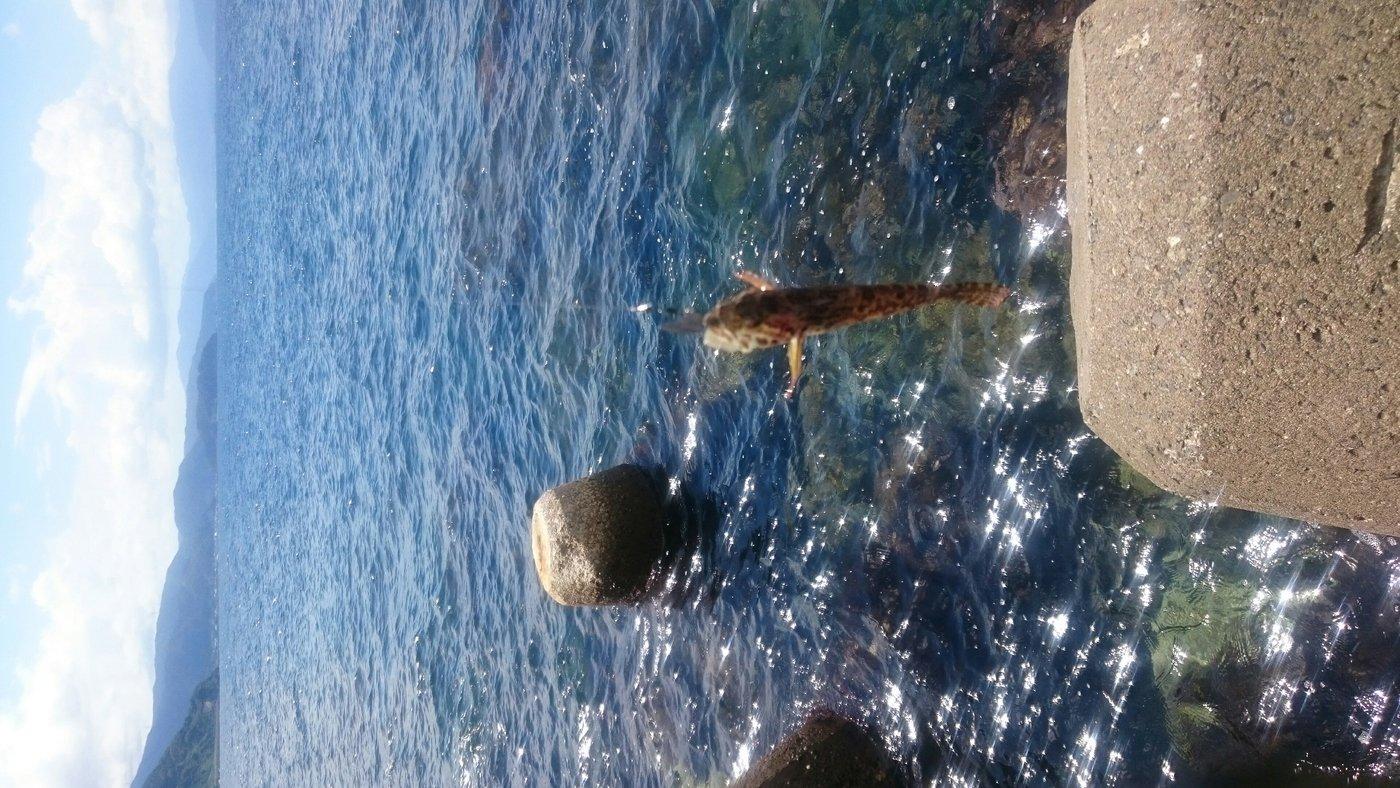 けいいちさんの投稿画像,写っている魚はアナハゼ