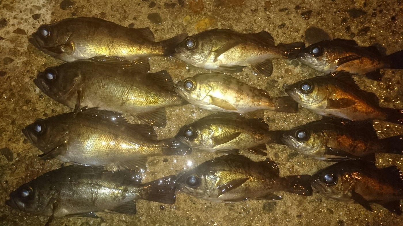 ブラックさんの投稿画像,写っている魚はメバル