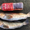 きこりさんの青森県北津軽郡での釣果写真