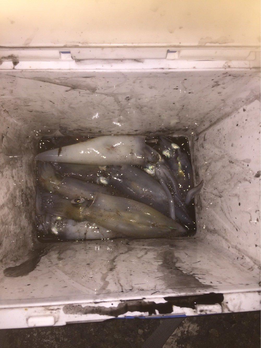 ユウさんの投稿画像,写っている魚はアカイカ