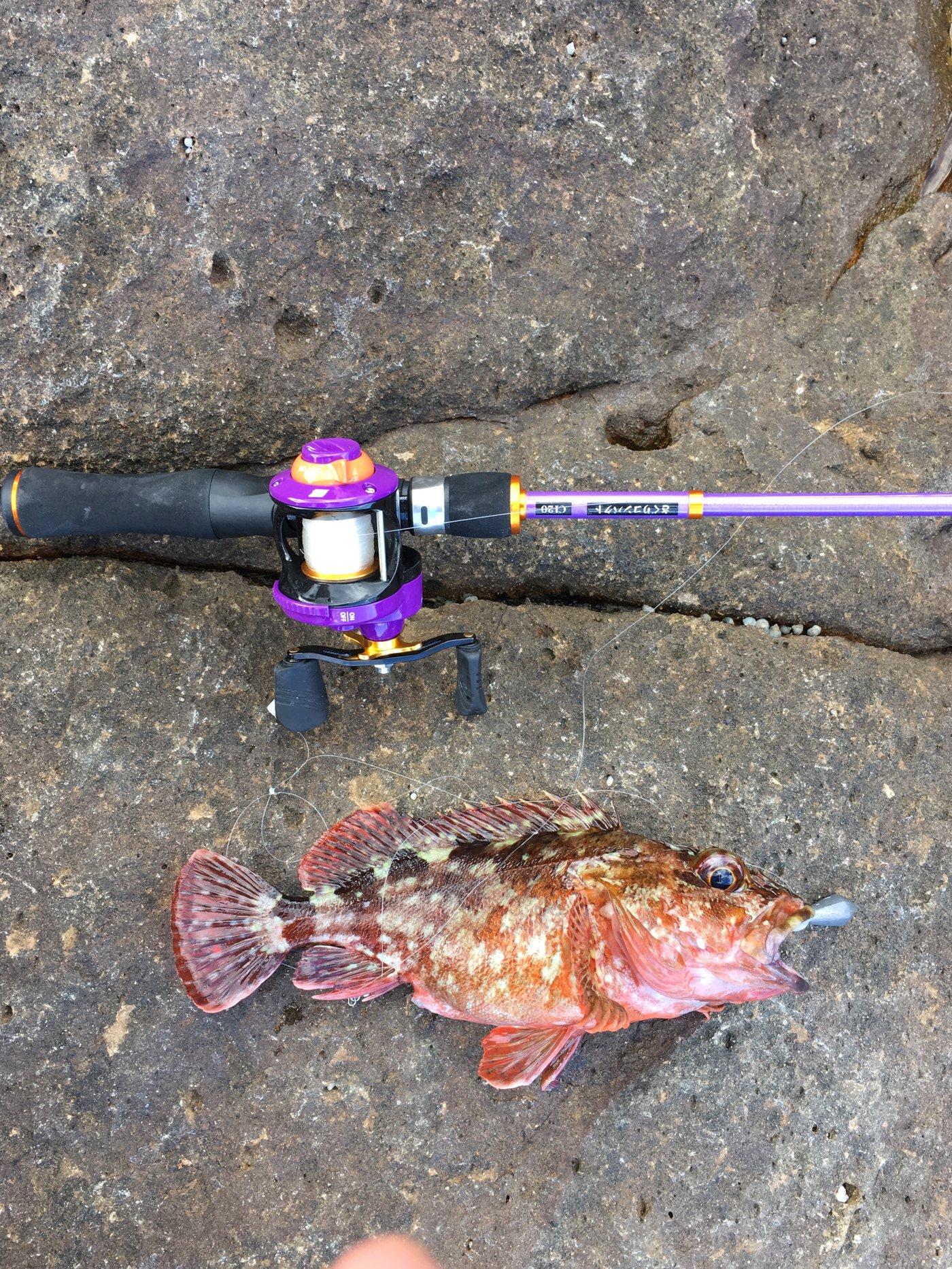ケイスケさんの投稿画像,写っている魚はカサゴ