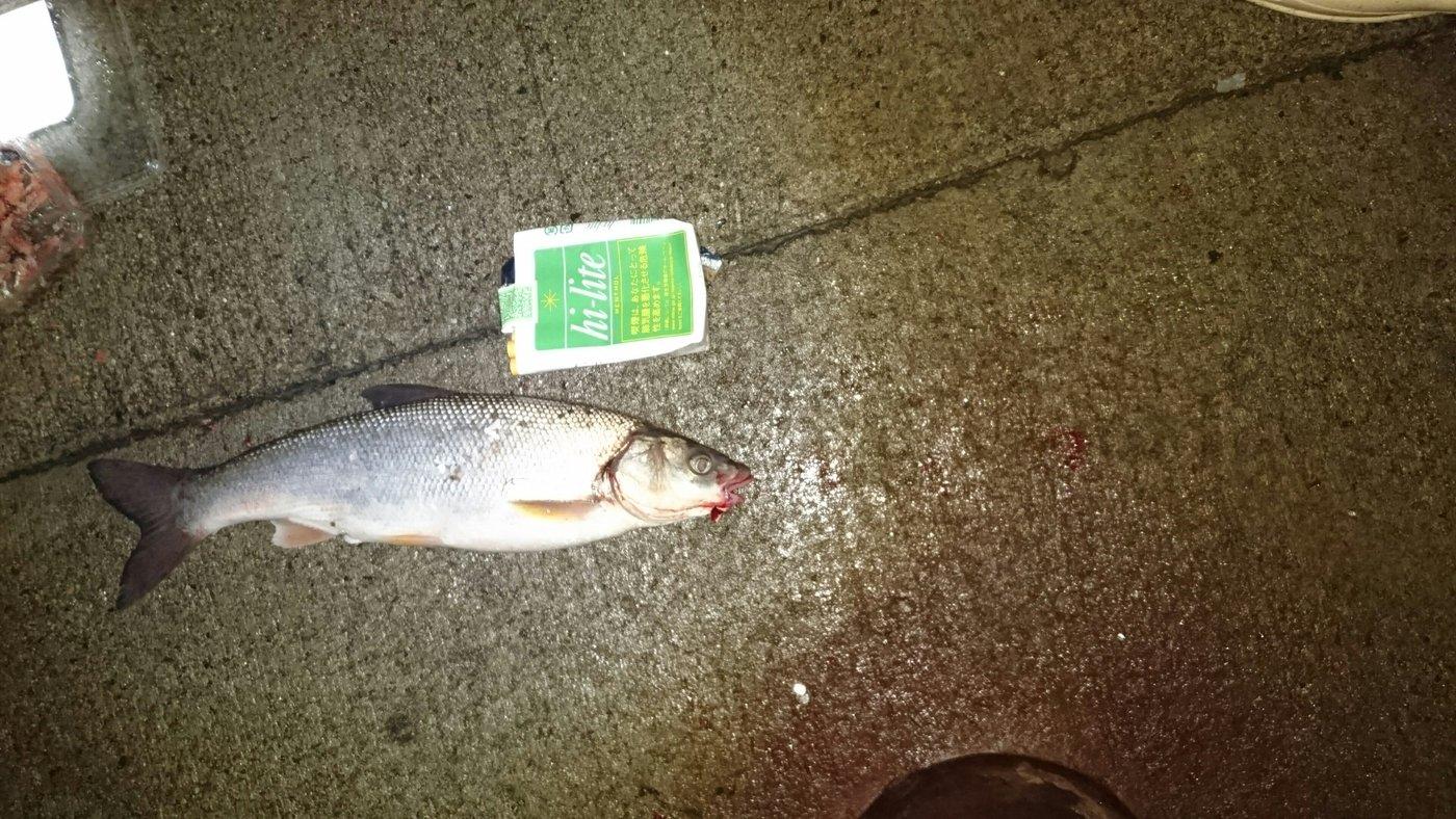 ハイラックス野郎さんの投稿画像,写っている魚はウグイ