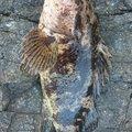 ゴールドさんのタケノコメバルの釣果写真