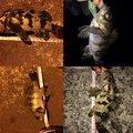 うどんさんのタケノコメバルの釣果写真