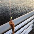 BO_ZUさんの千葉県千葉市での釣果写真