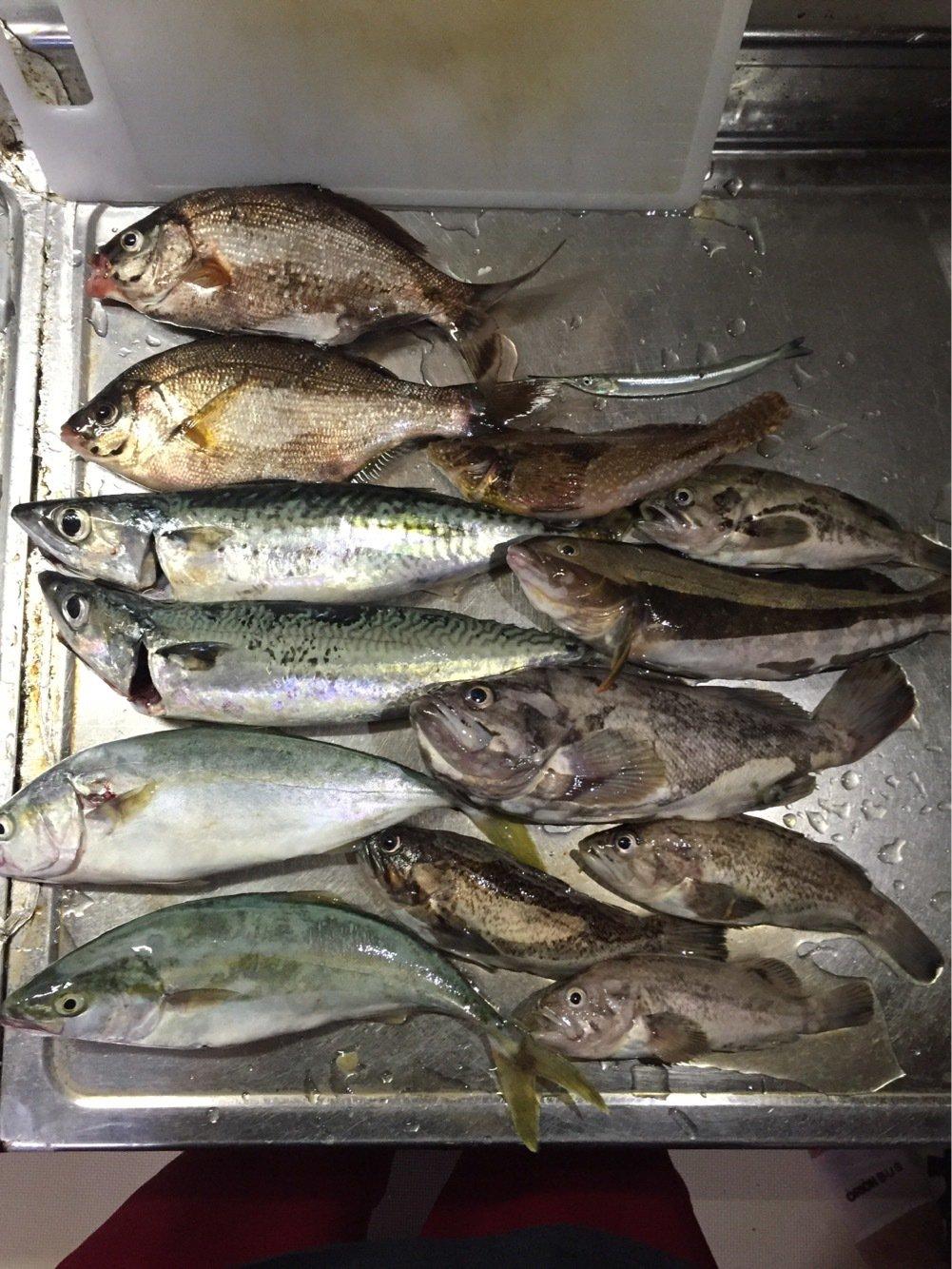 ガーシューさんの投稿画像,写っている魚はクロソイ