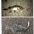 tyuki さんのヒラメの釣果写真