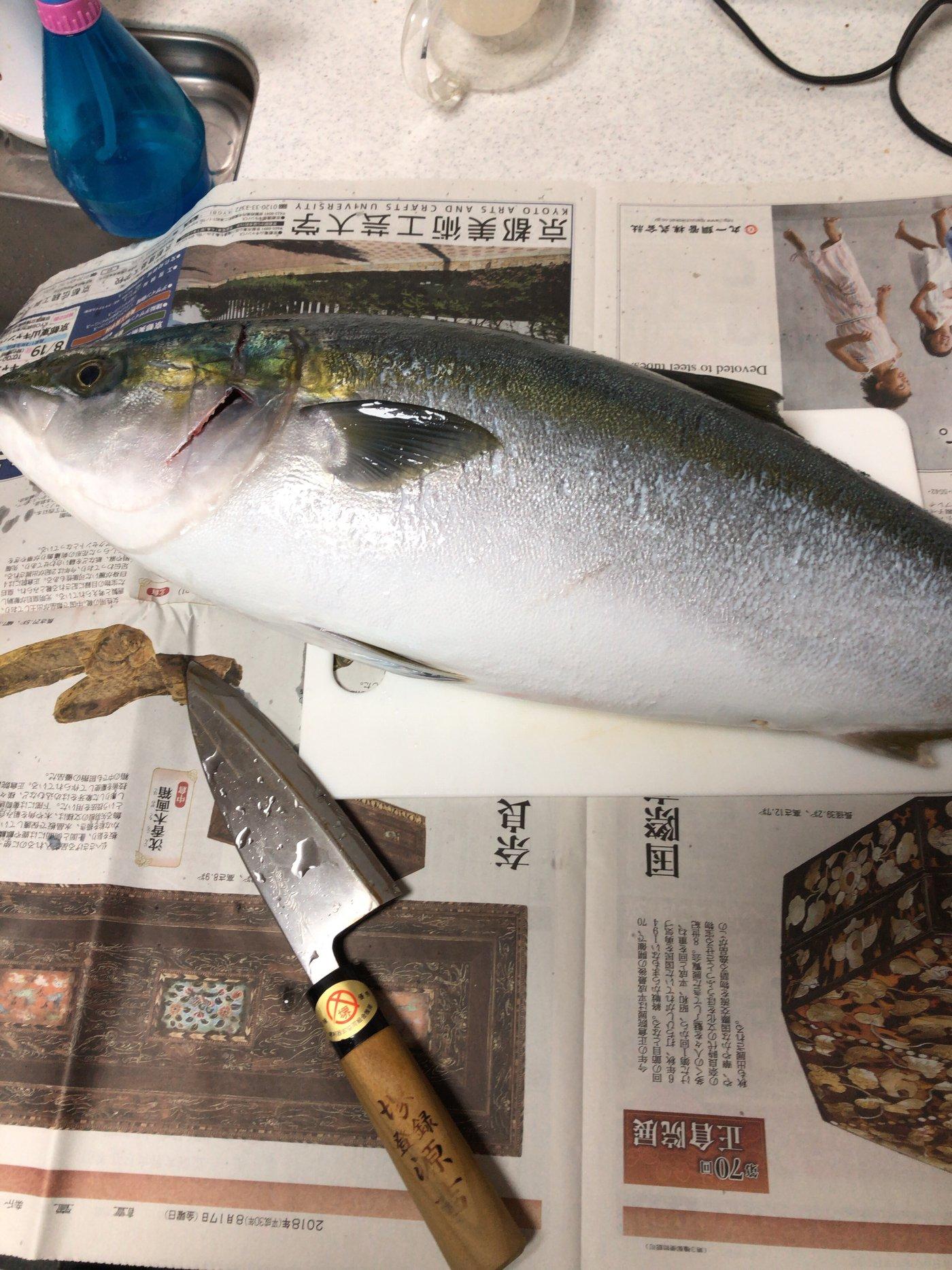 NORIさんの投稿画像,写っている魚はワラサ