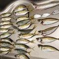 ひろさんの千葉県館山市での釣果写真