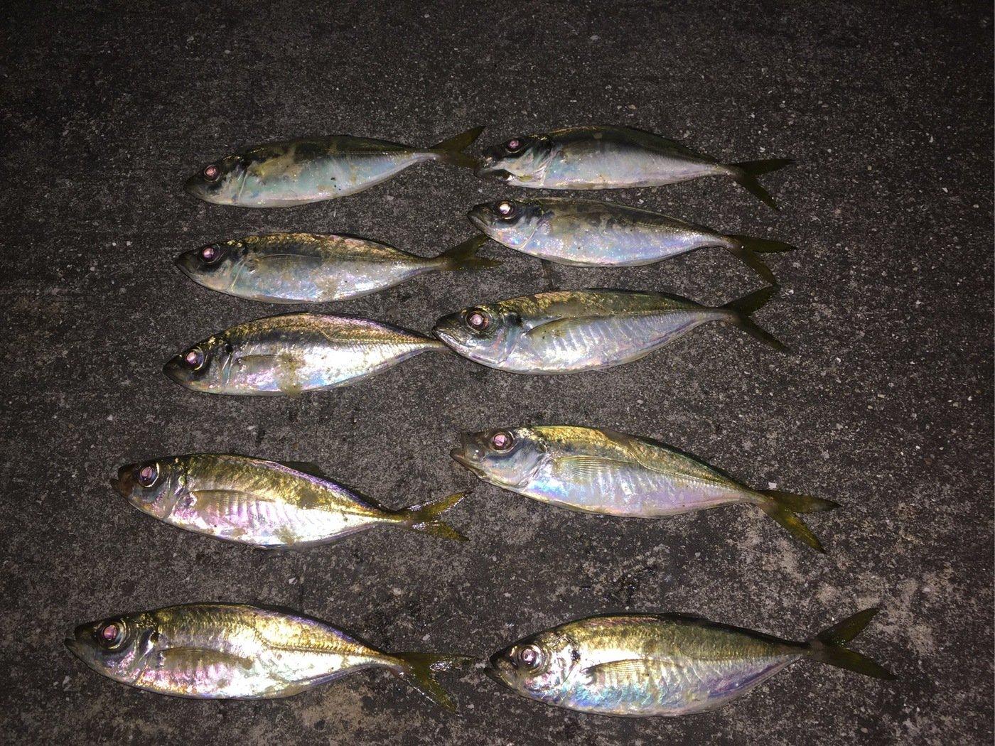 平野 健太さんの投稿画像,写っている魚はマルヒラアジ