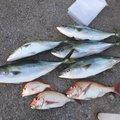 dollyvardenさんの福岡県福津市での釣果写真